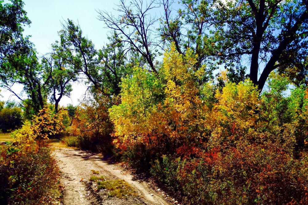 fall trees and dirt road